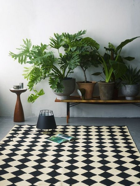 Large indoor plants - Nice indoor plants ...