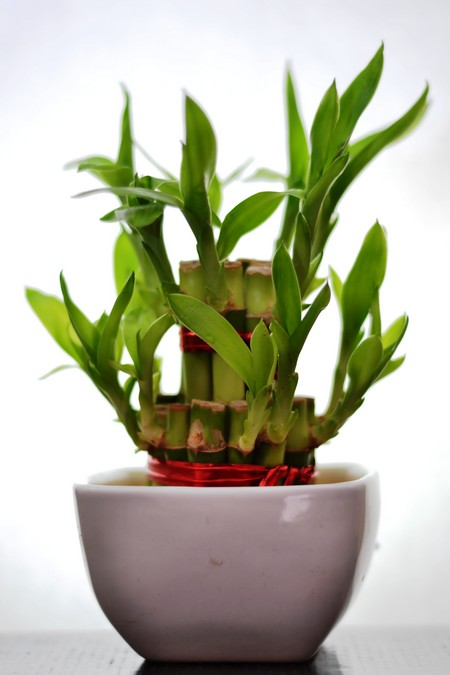 Feng Shui And How To Use Plants Indoor  wwwnicespaceme