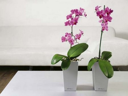 Modern-Indoor-Planters-Collection-from-Lechuza-3
