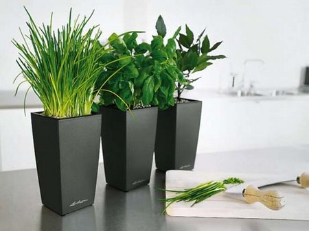Indoor Planters from Lechuza