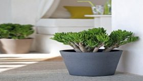 Feng Shui And How To Use Plants Indoor