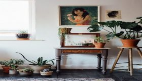 Improve Your Living Space With Indoor Plants