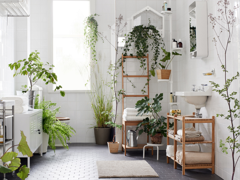 Using Plants As Décor In The Bathroom